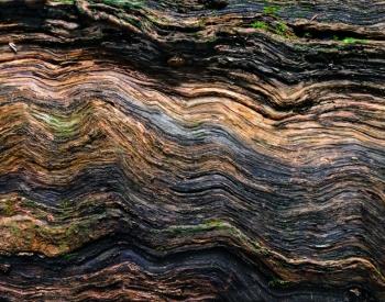 Wood- USA